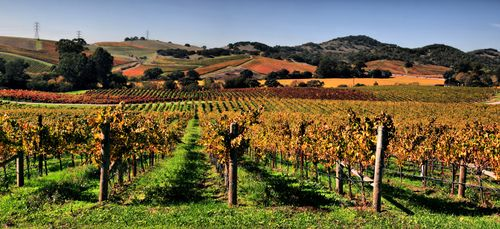 Napa-Valley-California_